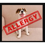 Allergy To Dogs - Marco Island, FL, USA