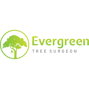 Evergreen Tree Surgeon - Wisbech, Cambridgeshire, United Kingdom