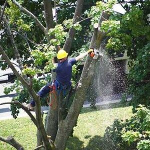 Timberlake's Tree Service Chesapeake - Chesapeake, VA, USA