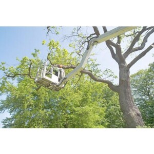 Manchester Tree Service Co - Manchester, CT, USA