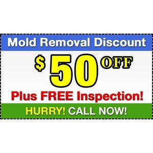 Mold Removal Kingston - Kingston, ON, Canada