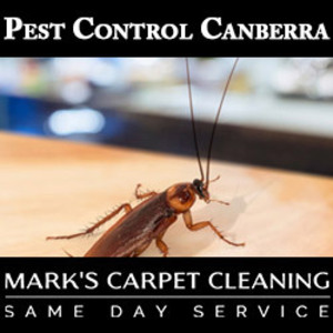 Pest Control Canberra - Canberra, ACT, Australia
