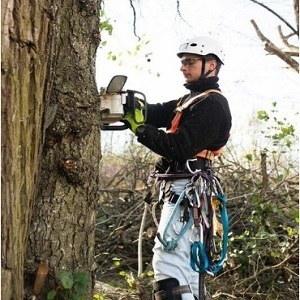 Tree Service Stamford - Stamford, CT, USA