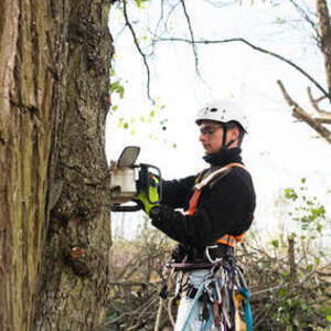 Webster Groves Tree Service - Saint Louis, MO, USA