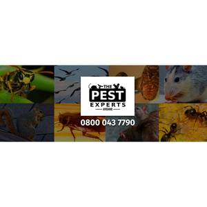 The Bed Bug Experts - Portsmouth, East Ayrshire, United Kingdom