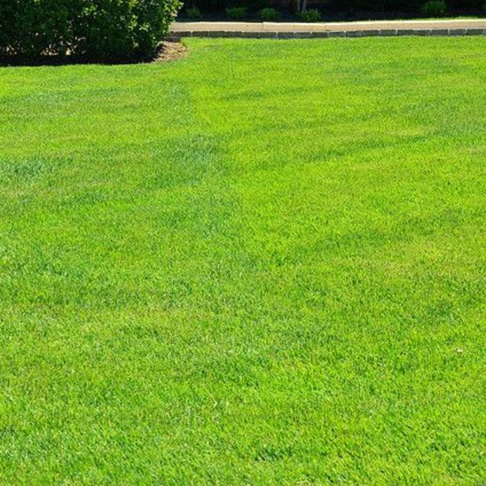 Greenpal Lawn Care Of Indianapolis Indianapolis Indiana
